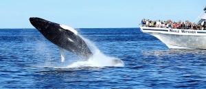 Whale-watching-mirissa-srilanka